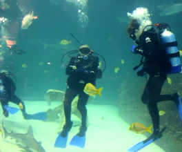 Scuba Divers With Different Kinds Of Fish